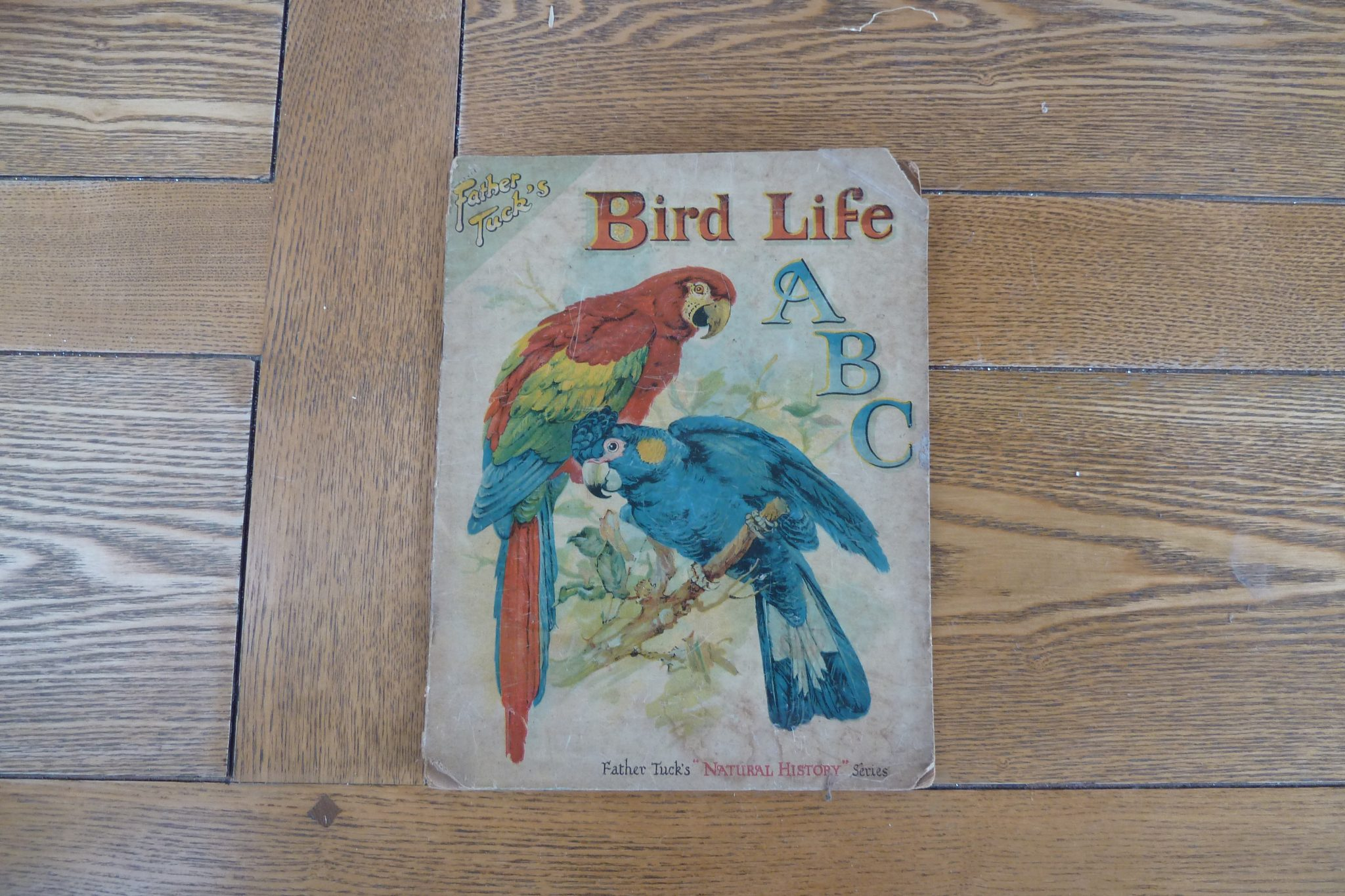 Bird Life ABC (Father Tuck's Natural History Series)